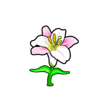 File:Common Regal Lily.png