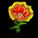 Specimen Fire Poppy