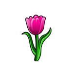 Common Pink Tulip