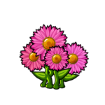 File:Common Pink Daisy.png