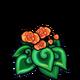 Orange Spiral Begonia