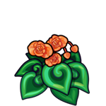 File:Orange Spiral Begonia.png