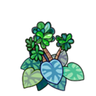 Jade Begonia