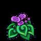 Purple Spiral Begonia