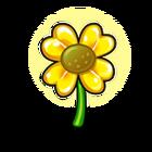 Lucky Sunflower