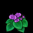 Purple Begonia