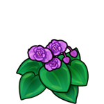 File:Purple Begonia.png