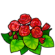 ScarletFire Begonia