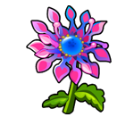 File:Specimen African Daisy.png