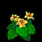 Lilonia