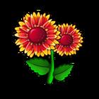 Firewheel Daisy