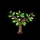 Common Jade