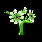 Succulent Daisy