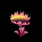 Tropical Venus Flytrap