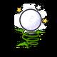Specimen Moondance Poppy