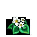 White Spiral Begonia