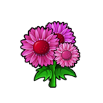 File:Pink Gerber Daisy.png