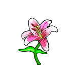 File:Common Japanese Lily.png