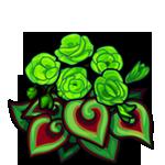 Green Spiral Begonia