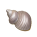 C0288 Colorful Seashells i01 Pearlescent Seashell