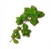 C0383 Sonorous Voice Elixir i02 Twig of Mint