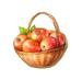 C0293 Apple Feast i01 Basket of Apples