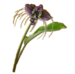 C0348 Rare Flowers i01 Tacca
