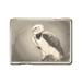 C0023 Exotic Birds i04 American Harpy Eagle