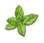 C0271 Medicinal Herbs i05 Mint