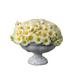 C0073 Flower Garden i04 Daisies