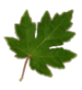 Collection Fixer Leaf