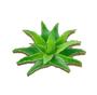 C0271 Medicinal Herbs i01 Aloe