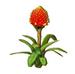 C0348 Rare Flowers i03 Guzmania