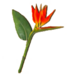 C0348 Rare Flowers i02 Strelitzia Reginae