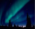 A.borealis.png
