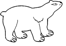 Медведица короткошерстная
