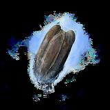 Семечко тыквы