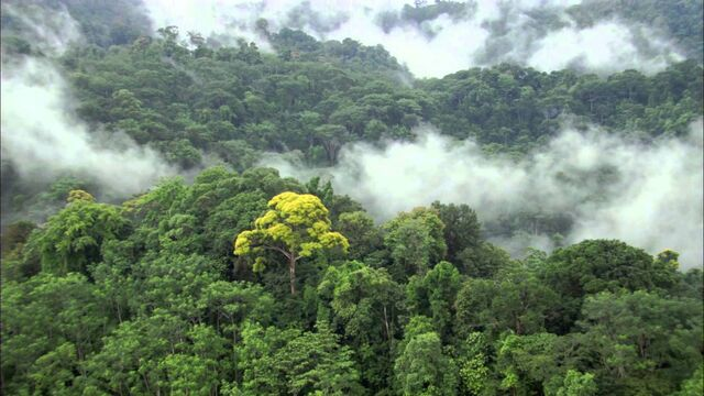 File:Henonn Jungle.jpg