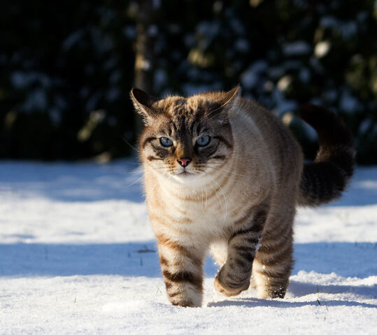 File:Cat King.jpg