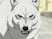 Kiba-wolfs-rain-4180850-640-480