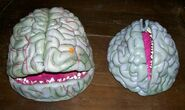 Hall7brains