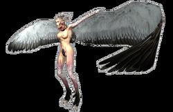 617px-Harpy 3
