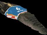 Крокодил - Футболист
