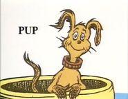 Pup again
