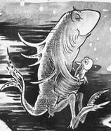 Australian Kangaroo Fish