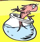 Norval carlos fish