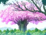 Forêt du Roi des Fées