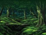 Forêt des Rêves Blancs