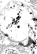 Albion Manga