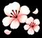 Moonlite Isle icon